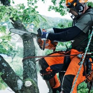 Baumpflege-Motorsägen, Carvingsägen und Hochentaster