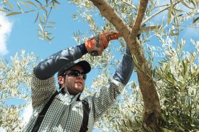 Werkzeuge Für Gartenpflege und Baumpflege